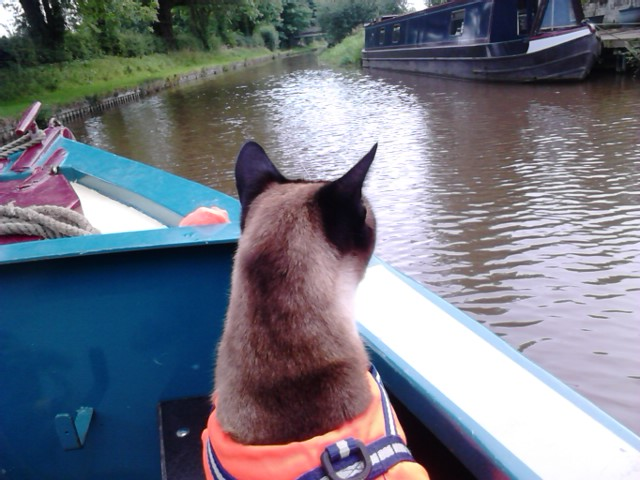 Cat on a Cheshire Cat Holiday. Even cats wear Life Jackets!