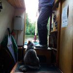 Pippa's purrfect Cheshire Cat Narrowboat Holiday